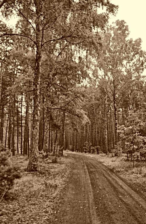 Droga w lesie #droga #drzewa