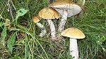 images43.fotosik.pl/1037/d1a37f19ab46b6dem.jpg