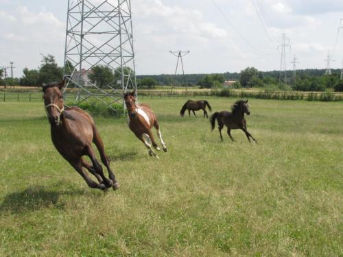 Premia, Pinia, Tymotka, a w tle Figlarz zajadający się trawą - Kenter