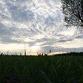 #Bralin #chmury #ZachódSłońca #drzewo