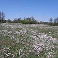 PZK protest ochrony środowiska #przyroda #wiosna #tyłek #natura #yoong #biało #łące