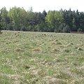 PZK #pzk #widok #polska #zielone #pole #qaz