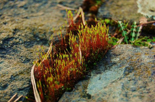zielona trawa, zielony mech, zielona żaba rech rechu rech;) #mech