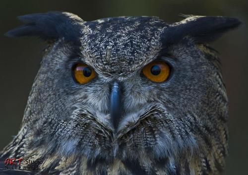 Spójrz mi w oczy... #Naris #Natura #Sowa #Zwierzęta