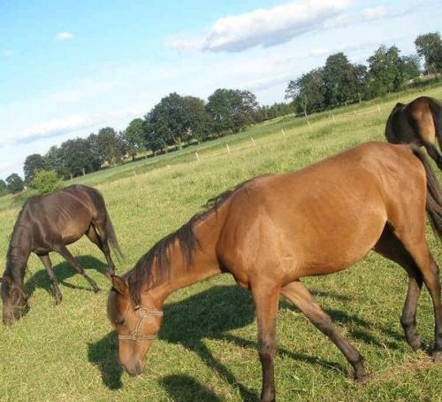 #konie #koń #zwierzęta