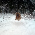 Baba w locie #funny #śmieszne #Baba #pies #zima #ruda #las