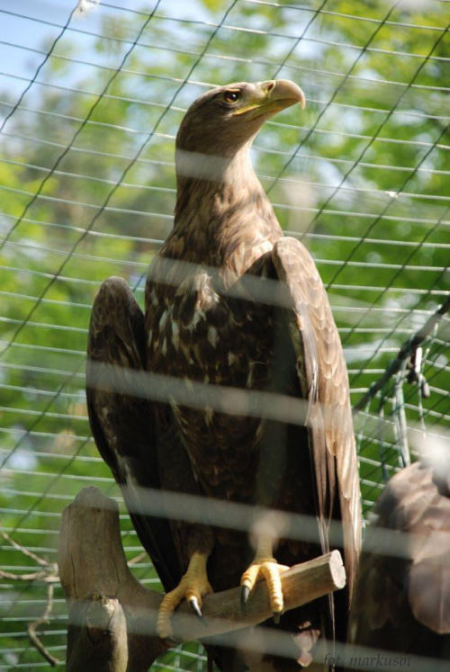 pewnie by polatał a nie za niewinność siedzi... #ptaki