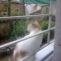 #kot #okno #Turcja #Istanbul