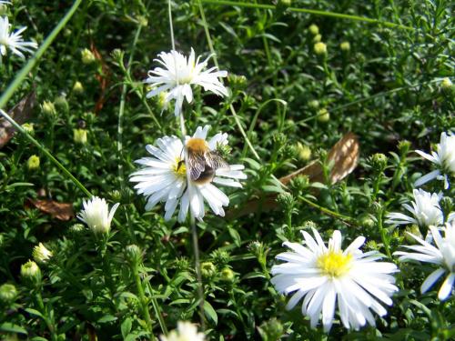 #owad #zwierzę #przyroda #roślina #kwiat