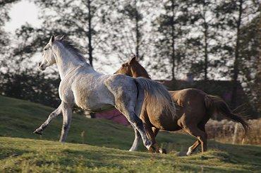 Wyścig #KonieKoń