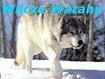 Wilcze Watahy