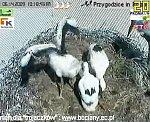http://images43.fotosik.pl/143/d7a27ea24d57e69bm.jpg