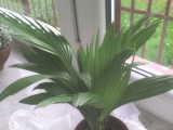 palma #cytryny #egzotyka #palmy