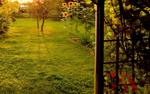 w ogrodzie #kwiaty #ogrod