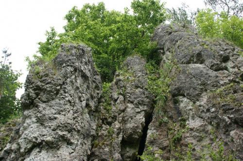 #skały #rośliny