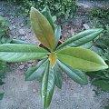 #roślina