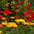#kwiaty #ogród #kolor #natura #lato