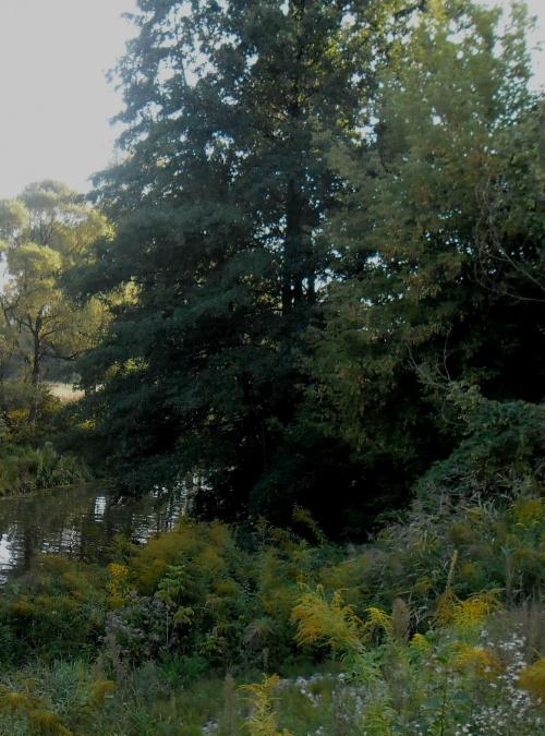 Przyroda okolice Będzina #las #natura #rzeka #przyroda #rośliny #liść #lasy