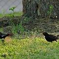 #ptaki #kosy