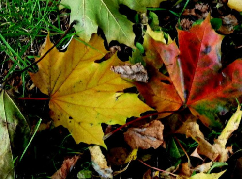 w parku #barwy #drzewa #jesien #park #staw