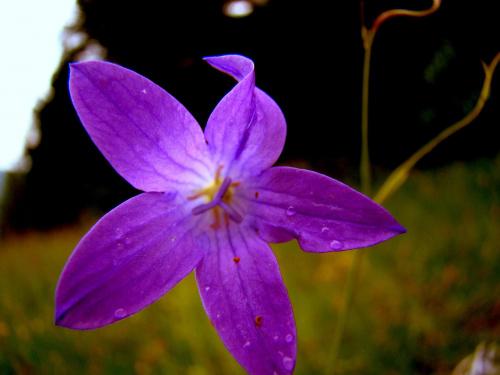 #KwiatMakro