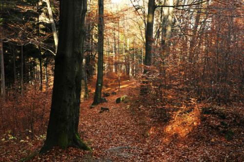 ...jesienny dywan #jesień