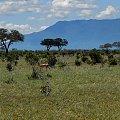 park narodowy Tsawo #Kenia #safari #Tsawo