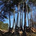 Nad Brdą (Janowo) #brda #drzewa #przyroda