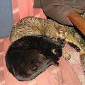 Sen to zdrowie #koty #sen
