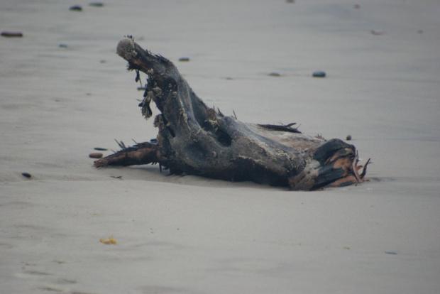 Co morze wyrzuci #natura #przyroda #zwierzęta
