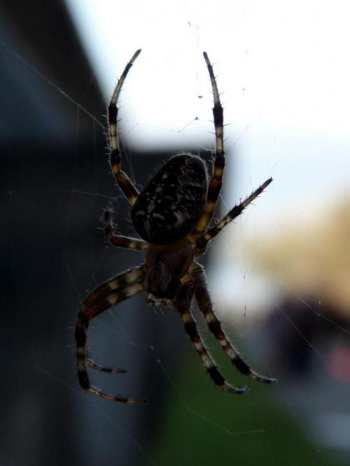 #pająk #pająki #natura #owad #makro