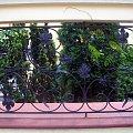 Płot #ogrodzenie #ornament #wzór