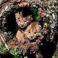słodziaki ;) #zwierzęta #fajne