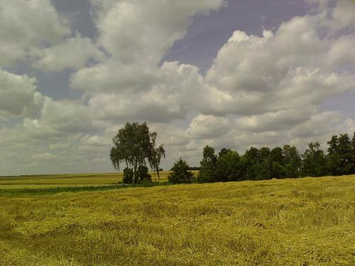 #krajobrazy #brzoza