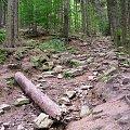 Droga na Zamek Bolczów. Rudawy Janowickie #Góry #rower #RudawyJanowickie #zamek #zamki #JanowiceWielkie #Bolczów #ZamekBolczów