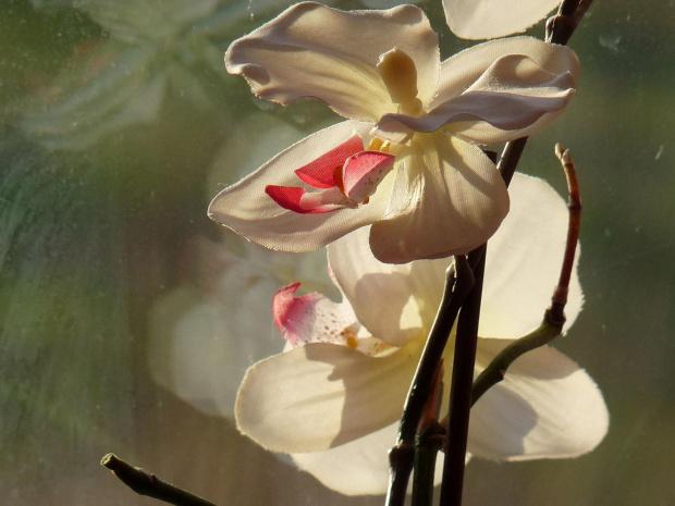 :) biale tez piekne #storczyki #kwiaty