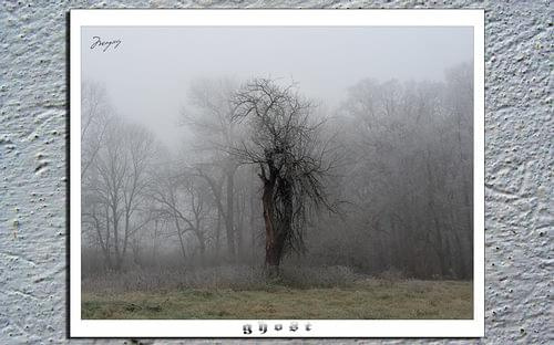 ghost #jabłoń #drzewo #mgła #ghost #duch