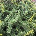 rośliny ogrodowe #działka #ogród #przyroda #rośliny