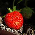 Truskawka doniczkowa [Olympus E-410, Zuiko Digital 14-42 + soczewka makro +8Dioptrii] #truskawka #owoc #natura #makro