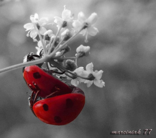 Kolor miłości... :-) #biedronka