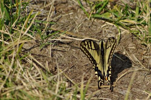 #natura #motyle
