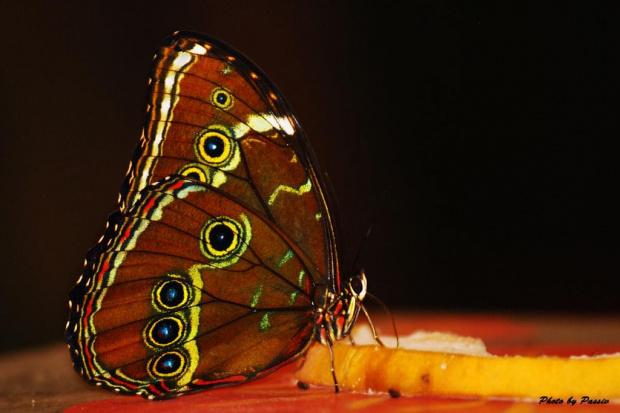 #motyl #zoo #wrocław