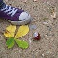 Powrót jesieni do Wawy #Łazienki #jesień #trampek #ŻółtyLiść