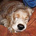 #posłanie #legowisko #Dudi #pies #derka #piesek