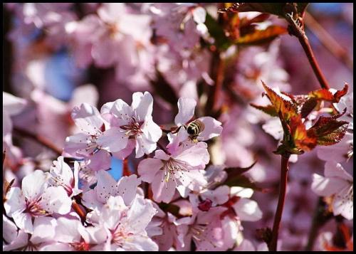 W ogrodzie 3 - dzisiejsze #wiosna #przyroda #kwiaty #ogrod