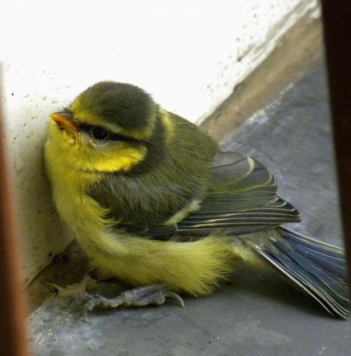 Ptaszek - przyleciał mnie odwiedzic :)
