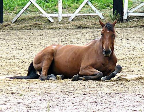 #konie #koń #natura #przyroda #zwierzęta