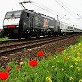 #InterCity #BWE #Błonie #express #wiosna #maki #kolej #PKP #pociąg