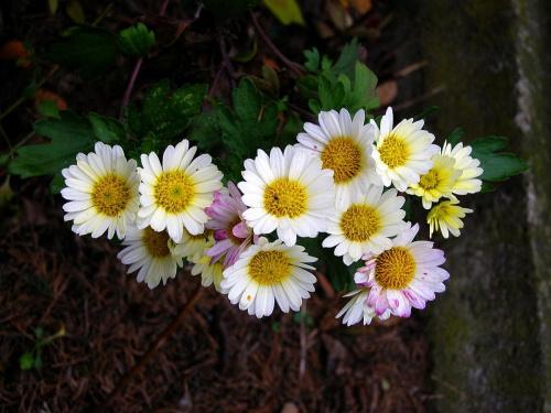 """kwiatki dla """" leśnej Ani .. """""""