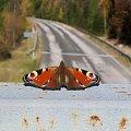 Harrachov,droga szybkiego ruchu i motyl gotowy do wyścigów :) zdjęcie przyjaciółki.. #Czechy #Harrachov #szosa